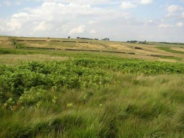 Enclosures_on_marginal_land,_Deer_Hill_Bents,_Meltham_-_geograph.org.uk_-_499699